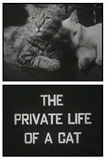 Watch The Private Life of a Cat Online Putlocker