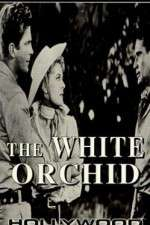 Watch The White Orchid Online 123movies