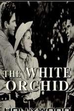Watch The White Orchid Online Putlocker