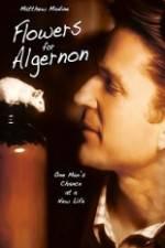 Watch Flowers for Algernon Online Putlocker